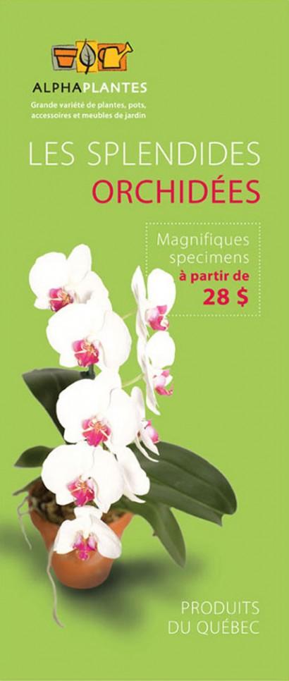 Affiche orchidées Alphaplantes